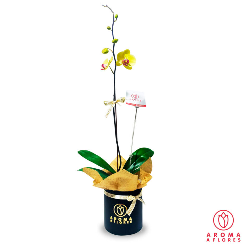 orquidia-aromaaflores